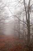 Forest with fog — Stock Photo