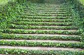 лестницы с плющом — Стоковое фото