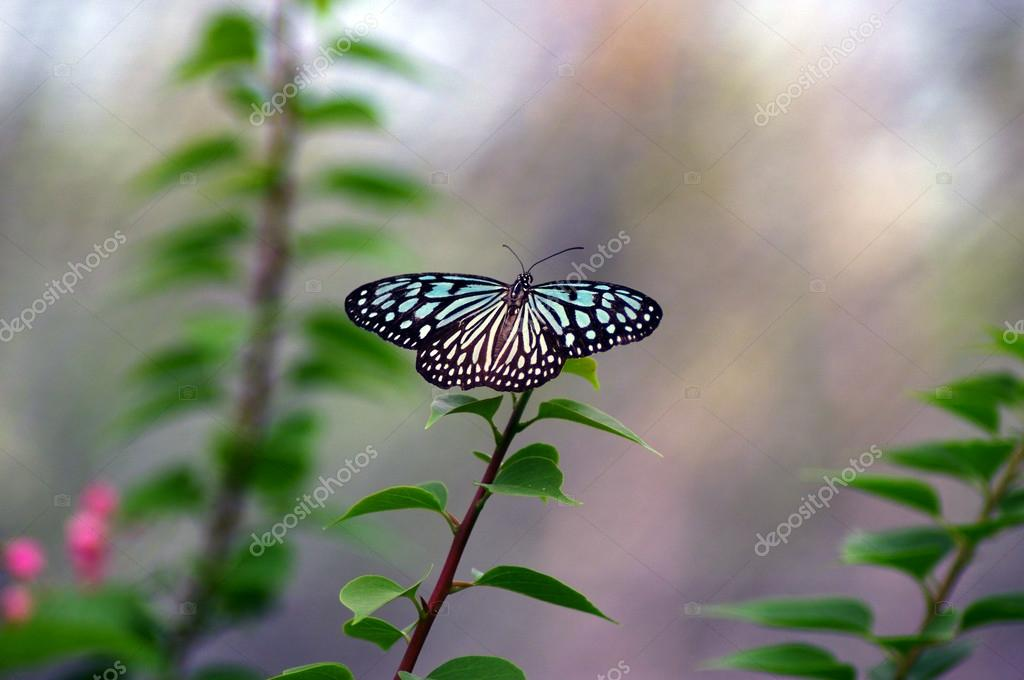 Brown-white butterfly sittinng on a branch. — Stock Photo #12121843