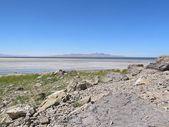 Desolate Shoreline — Photo