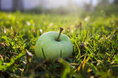 Green apple in grass — Stock Photo