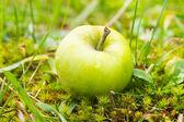 Wet yellow apple in grass — Stock Photo
