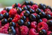 Black currants and pink raspberries — Stock Photo