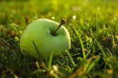 Apfel im sonnenlicht — Stockfoto