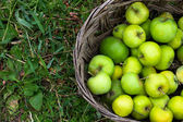 Green apples in basket — Stock Photo