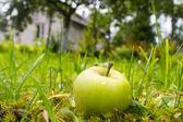 Mokre jabłko w pobliżu domu — Zdjęcie stockowe