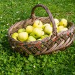 Basket with apples on grass — Stok fotoğraf