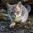 Small cat — Foto Stock