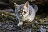 Small cat — Stock Photo