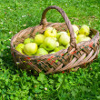 Basket with apples on grass — Stockfoto