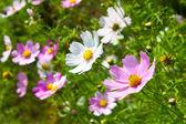 Barevné jarní květiny pozadí — Stock fotografie