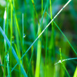 Green grass background with water drops — Stock Photo #22550197
