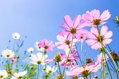 Flowers on sky background — Stock Photo