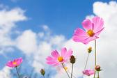 Blommor på himmel bakgrund — Stockfoto