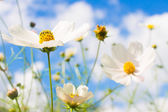 White flower on blue sky background — Stock Photo