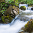 Forest stream — Stock Photo #34047603