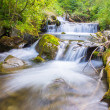 Forest stream — Stock Photo #34047661