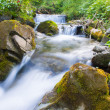Forest stream — Stock Photo #34047669