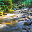 Forest stream — Stock Photo #34047843