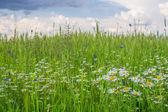 Zelené pole s květinami — Stock fotografie