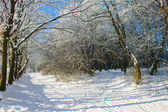 Road in snowy forest — Stockfoto