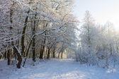 Shiny snowy forest — Stockfoto