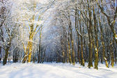 Snowy forest road — Stock fotografie