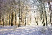 Light in snowy winter forest — Stockfoto