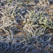 Frozen grass background — Stock Photo