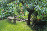 Apple garden — Стоковое фото