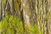 Wooden texturebackground — Stock Photo