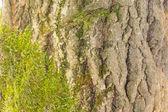 Texturebackground de madeira — Fotografia Stock
