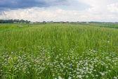 Green field — 图库照片