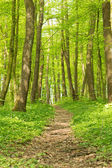 Spring forest background — Stock Photo