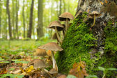 Many mushroom in autumn forest — Stock Photo
