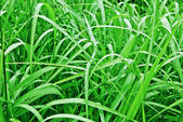 Background-of-green-grass-with-brilliant-drops-closeup — Stock Photo