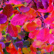 Bush-with-multicolored-autumn-leaves-close-up-selective-focus — Stock fotografie