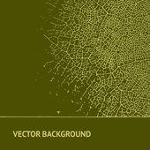 Leaf on vintage background. — Stock Vector