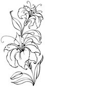 Flor del lirio — Vector de stock