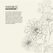 Branch of Chrysanthemum — Stock Vector