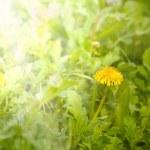 Art Beautiful spring flowers background — Stock Photo