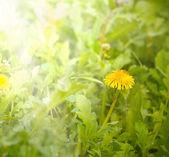 искусство красивые весенние цветы фон — Стоковое фото