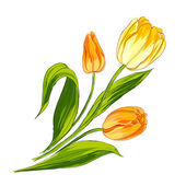Tulip bouquet — Stockvector