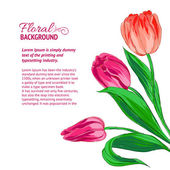 Red tulips and sample text — Stock Vector