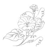 вьюнок цветок в белом. — Cтоковый вектор