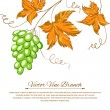 Grapes with autumn leaves around the grapes. — Stock Vector