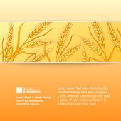Rye ears on orange background. — Stock Vector
