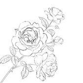Kontur der rose. — Stockvektor