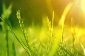 Sonnenaufgang über eine blühende sommerwiese — Stockfoto
