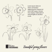 Jarní květina sada. — Stock vektor